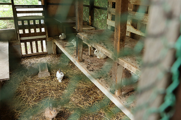 カルディア第2キャンプ場のウサギ小屋