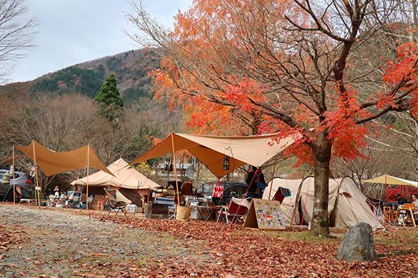 TACランドいたどりでの秋キャンプ設営後のサイトの様子