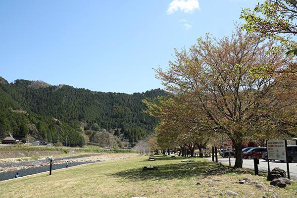 南光自然観察村の桜並木