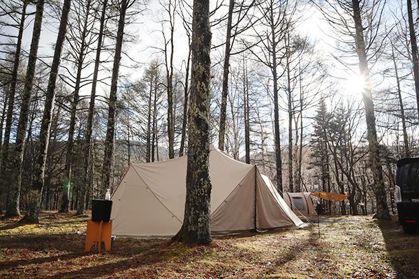 白樺のキャンプ場で朝日を浴びるスカイパイロットTC