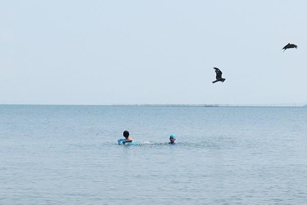 琵琶湖の湖水浴でトンビ急接近